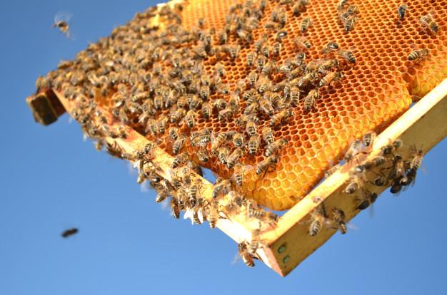 پرورش عسل
